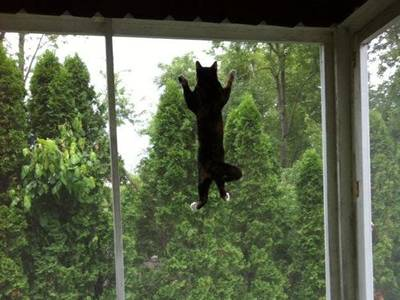 A cat is climbing on the window screen.