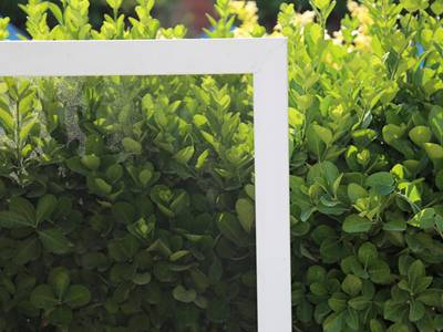 Comparison of green plant with or without window screen.