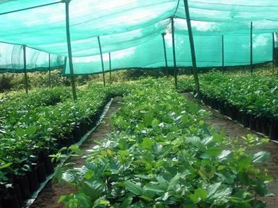Our tomato garden enclosure! (still needs some more screen ... |Vegetable Garden Screen
